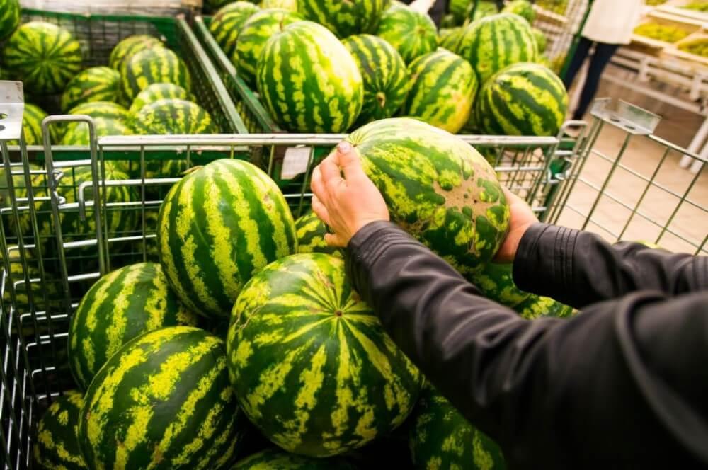 como escolher frutas e verduras - melancia